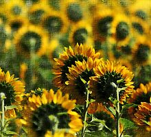 *Textured Sunflowers* by DeeZ (D L Honeycutt)
