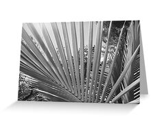 Palm Tree Fronds Greeting Card