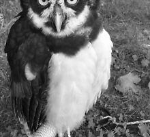 Spectacled Owl by SnapitRach