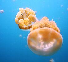 Jellyfish Universe 2 by AroundOurWorld