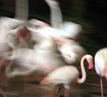 Night time Flamingos by Spiritualshaman