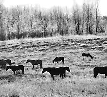 Frosty Horses in a Field by Doug Petry