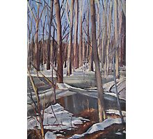Winter Scene in Rock Creek Park Photographic Print
