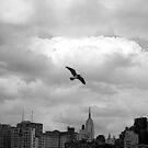 NYC by lotusblossom