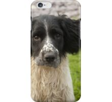 Spaniel Phone Cover iPhone Case/Skin