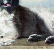 Newfoundland Dog Painting Sticker