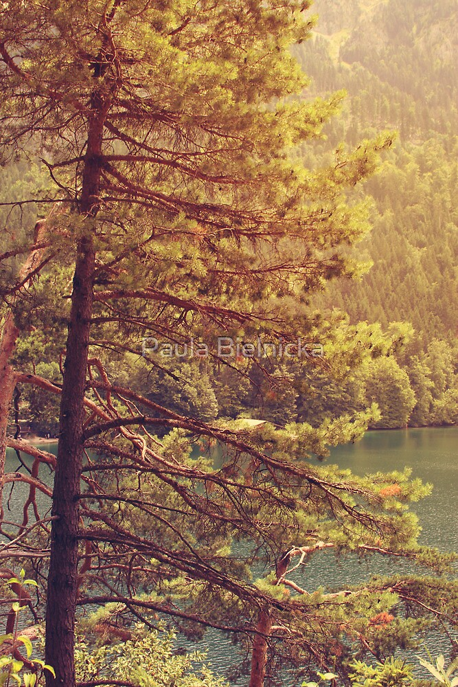 Pines by Paula Bielnicka