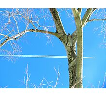 Bow and arrow Photographic Print