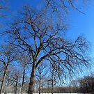 Winter in Pelham Bay Park by Alberto  DeJesus