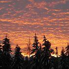 Winter Sunset by Martha Medford