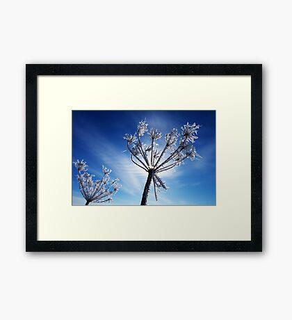Winter Jewels #3 Framed Print