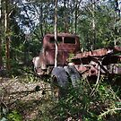 Forest Veteran by Liz Worth