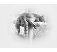Sleeping It Off! Photographic Print