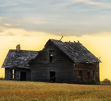 On Golden Field by Mark Iocchelli