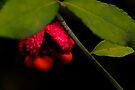 Woodland Strawberry Bush Bloom by NatureGreeting Cards ©ccwri