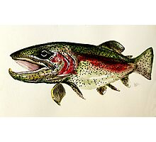 ALASKAN RAINBOW TROUT ART, from J. Vincent Scarpace. AWESOME, MUST SEE Photographic Print