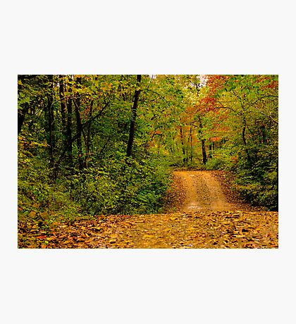 Opossum Creek Road Photographic Print