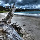 Driftwood HDR - Rheban Beach, Orford, Tasmania, Australia by PC1134