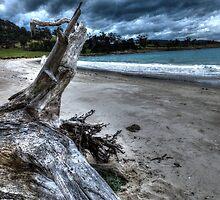 Driftwood HDR - Rheban Beach, Orford, Tasmania, Australia by PC1134