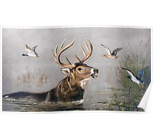 Stag wading through Water painting Poster