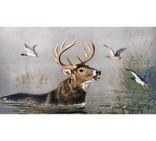 Stag wading through Water painting Photographic Print