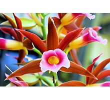 Southern swamp orchid Photographic Print