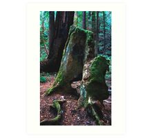 Moss Covered Remnants Art Print