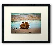 Sea sponge at sunset Framed Print