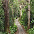Bush Avenue  by phillip wise