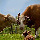 Kissin' cows by Violaman
