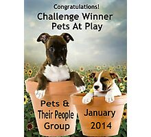 Banner Design for Challenge Winner.  Pets at Play. Photographic Print