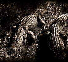 See Ya Later Alligator by StudioBlack