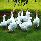 Gaggle of Geese by Susan Savad
