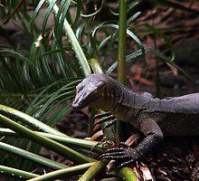 Lizzard  Tropical North Queensland by Imi Koetz