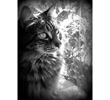 I Iz Kitty Photographic Print