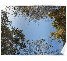 Tiergarten Trees Poster
