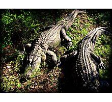 See Ya Later Alligator 2 Photographic Print