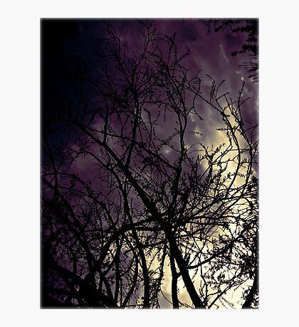 Branches Photographic Print
