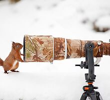 Red Squirrel Posing by dgwildlife