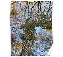 Tiergarten Trees 1 Poster