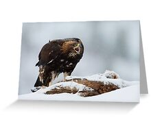 Golden Eagle Calling  Greeting Card