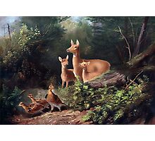 Deer family in the woods painting Photographic Print