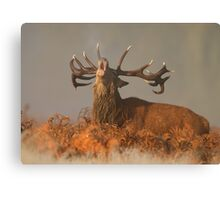 Red Deer in the Mist Canvas Print