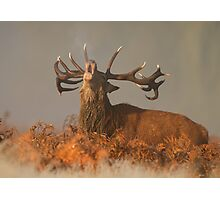 Red Deer in the Mist Photographic Print