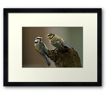 Busy Blue Tit Framed Print