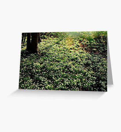 Snowdrops at Painswick Rococo Garden Greeting Card