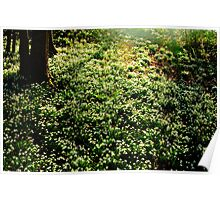 Snowdrops at Painswick Rococo Garden Poster