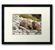 European Otter Framed Print