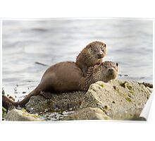 Otter Mum with a Cub  Poster
