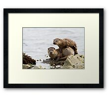 Otter Mum With a Playful Cub Framed Print